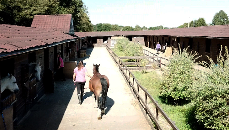 Stag-Lodge-Page-Bottom-Horse-Care-Courses