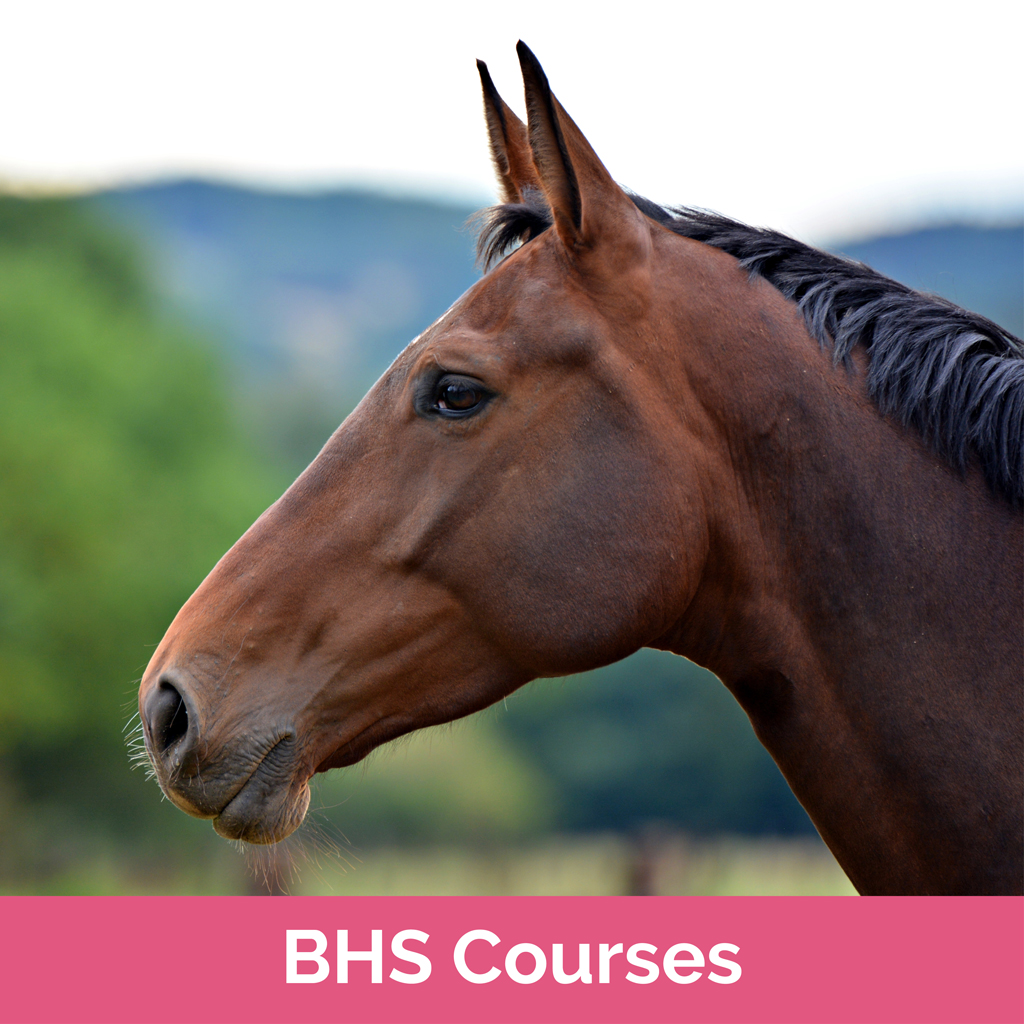 Stag-Lodge-Website-Buy-Pics-BHS-Courses
