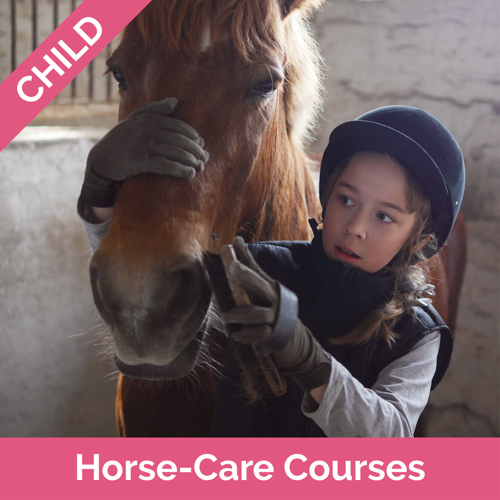 Stag-Lodge-Website-Buy-Pics-Child-Horse-Care-Courses